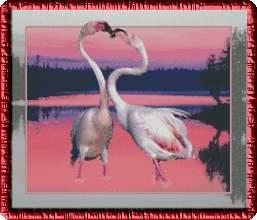 Фламинго в тихий час заката.
