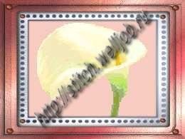 Белый цветок.